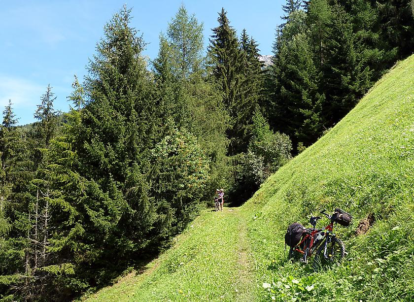 image from Saliendo del bosque...